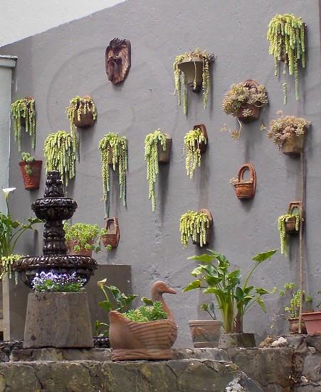 green hanging plants photo