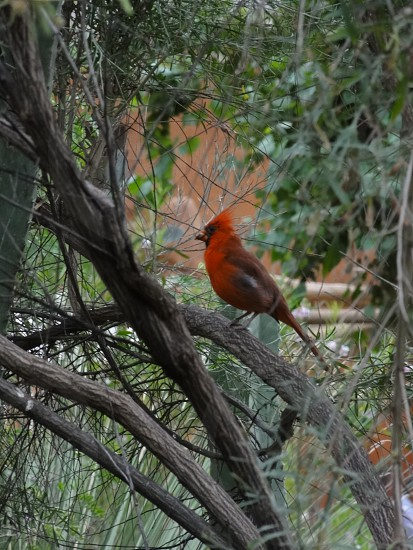 bird red tree zoo photo
