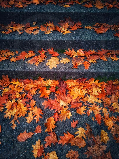 autumn stairs photo