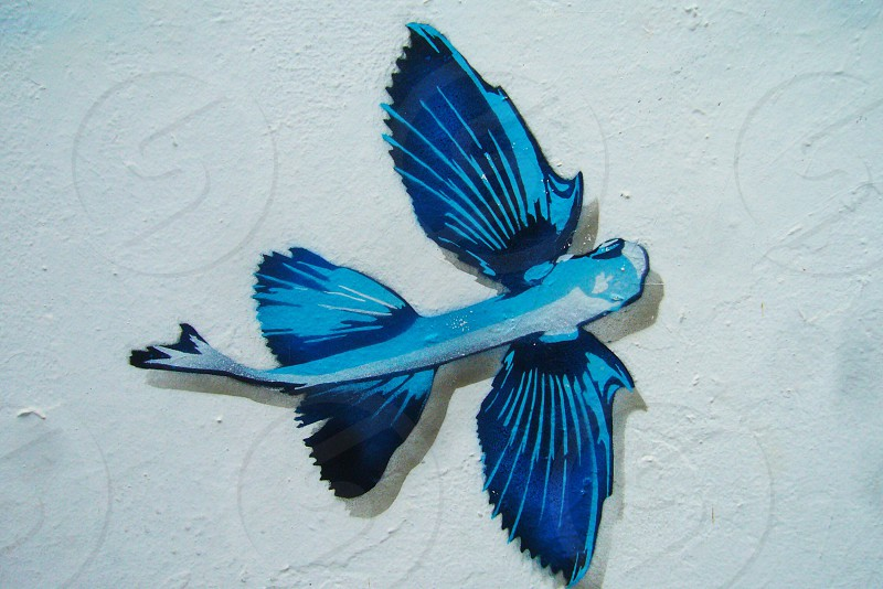 blue and white flying fish accent wall decor photo