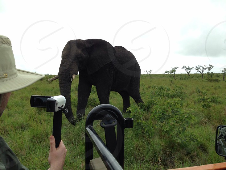 Elephant in South Africa photo