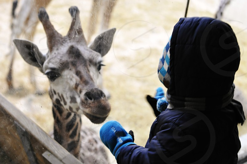 Little boy with Giraffe at the Zoo photo
