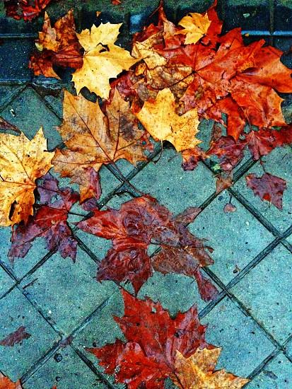 hojas agua mojado otoño photo