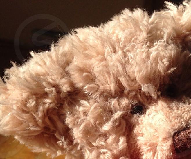 Soft fur fluffy teddy bear cuddly  photo