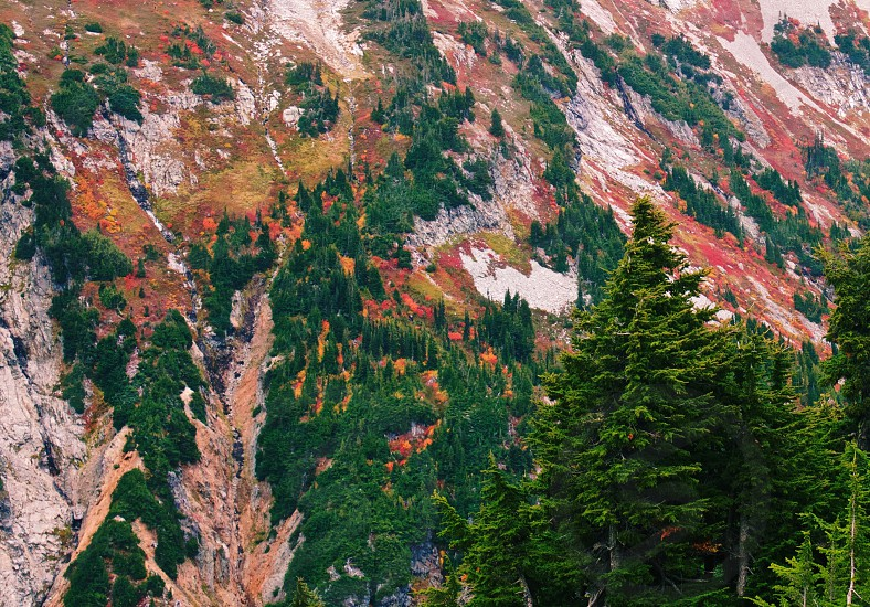 Trees fall distance snow autumn winter conifers forest mountains nature outside scenic photo