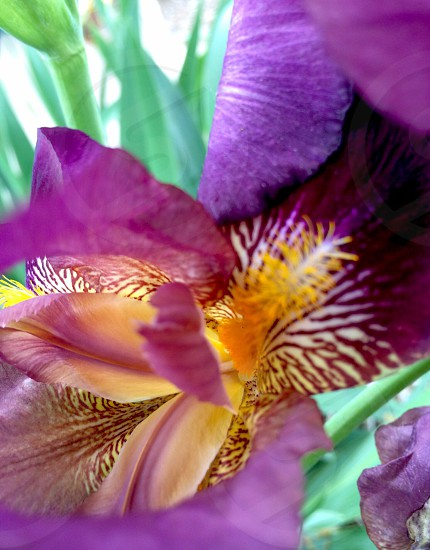 purple and yellow orchid flower photo