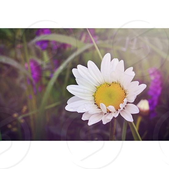 Daisy Love photo