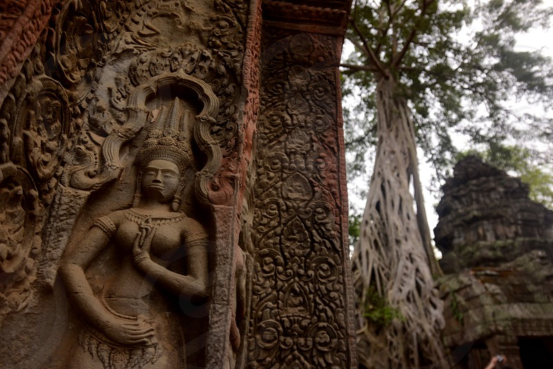 The Temple of  Ta Prohm  in the Temple City of Angkor near the City of Siem Reap in the west of Cambodia.  Cambodia Siem Reap April 2014 photo