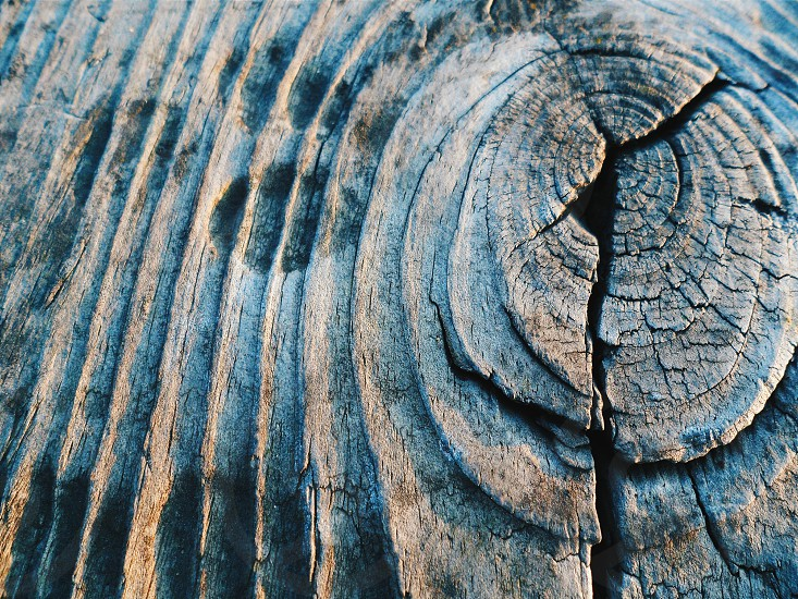 grey and brown wood with cracks in close-up photography photo