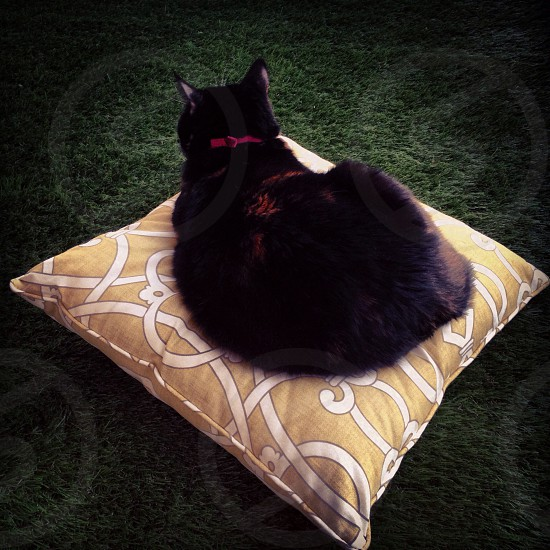 black cat lying on brown and white throw pillow photo