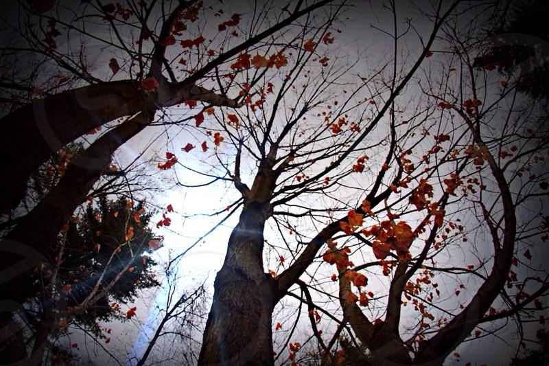 Fall trees photo