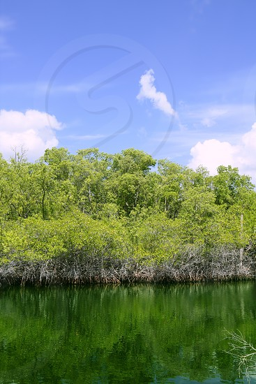 Florida Keys mangroove detail green water blue sky photo