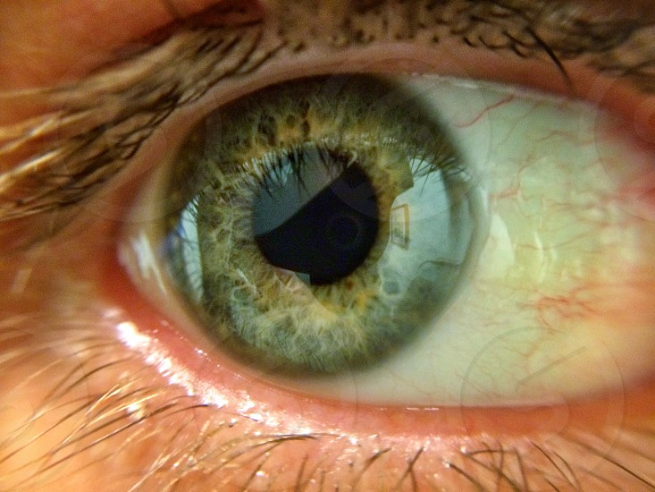 Green and Yellow Eye Color photo