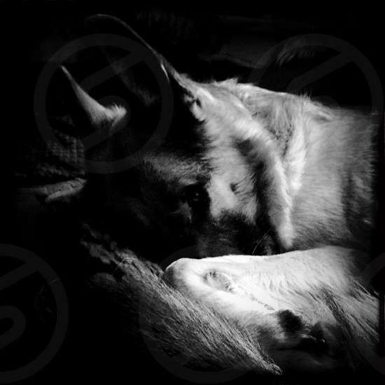 Let sleeping dogs lie  photo