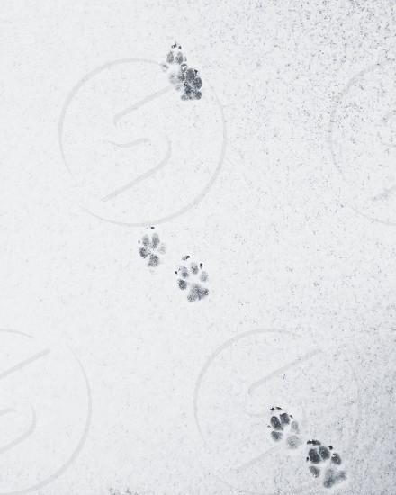 Snow dog paw winter paw prints  photo