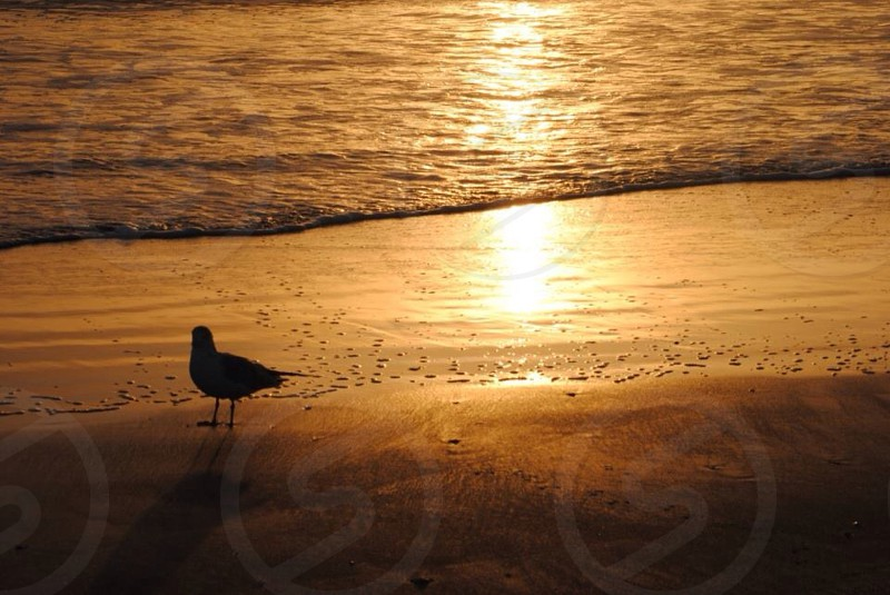 bird on sand photo