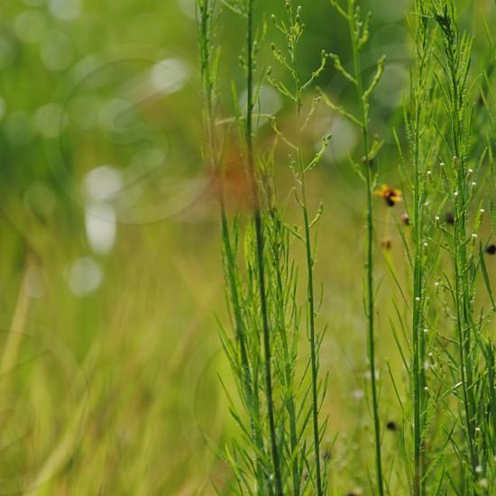 green plant stalks photo