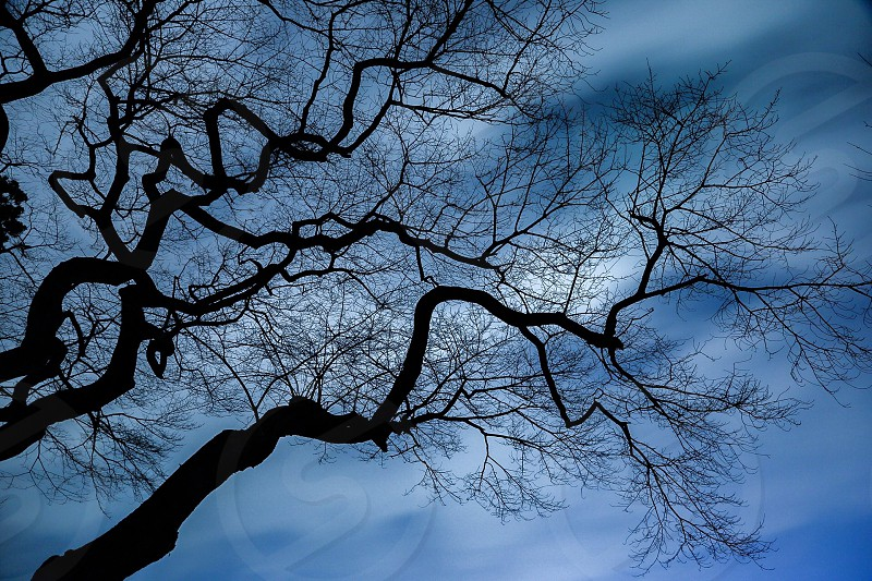 low angle photo of leafless tree during daytime photo