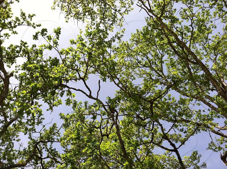 Trees. photo
