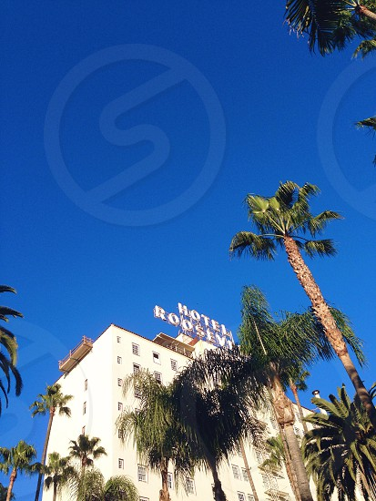 hotel roosevelt near tree photo