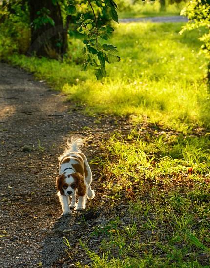 Dog grass green sunset natural light park photo