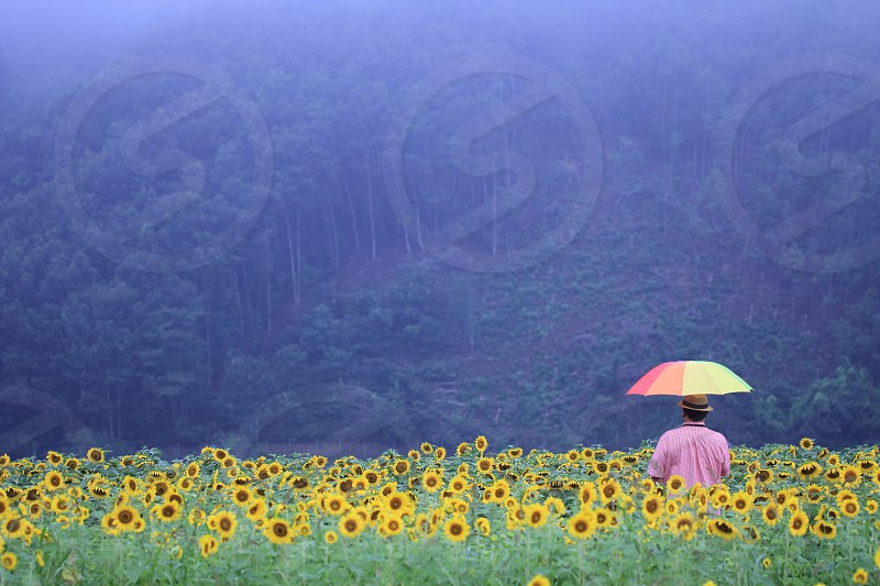 man in pink t shirt holding umbrella standing on middle of sunflower plantation photo