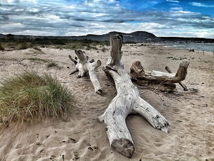 Wood on a beach photo