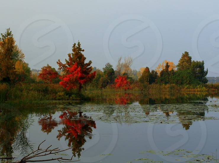 Red. Reflection lake colours trees red. photo