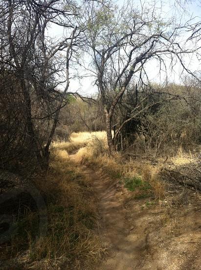 Desert trail photo