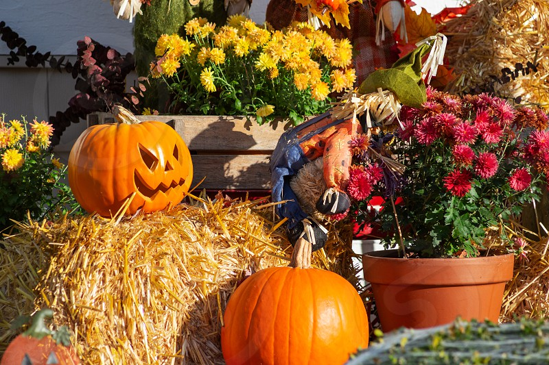 A scene of various Halloween decorations featuring pumpkins a haystack flowers and a scarecrow. photo
