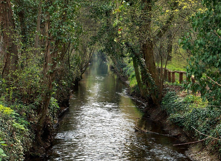 flowing river in between tall trees and bushes photo