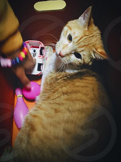 Tamalpais catat the boxcute catorange catbox photo
