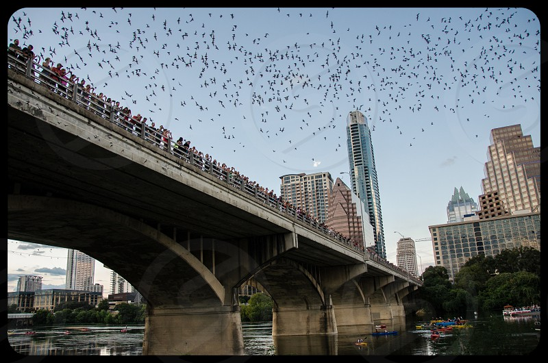 The millions of bats flying from Congress Bridge as the sun sets in the summer. photo
