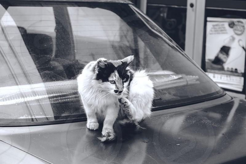 Valparaiso Cat..... Cerro Alegre  photo