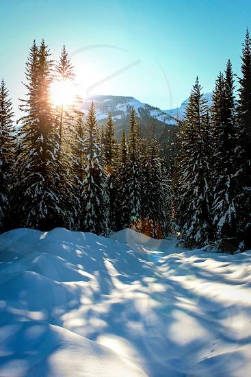 Trees forest mountains snow Banff Alberta sun Sky winter photo