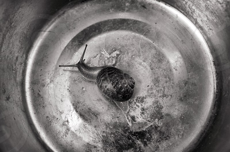 Snail black and white photo