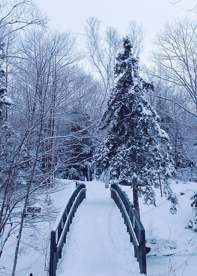 snowy tree photo