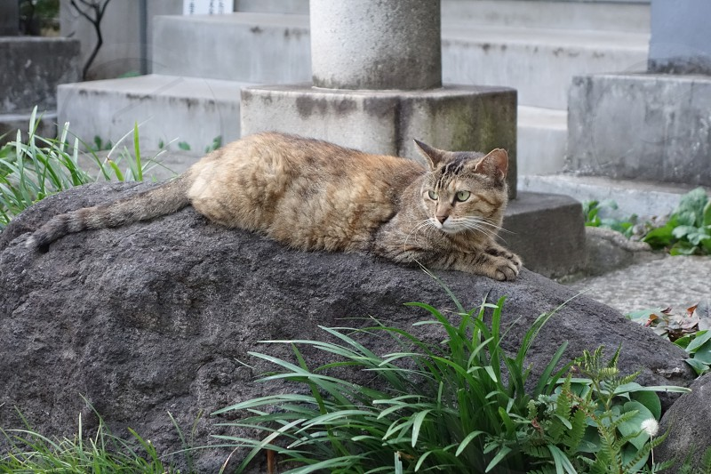 grey cat on rock photo