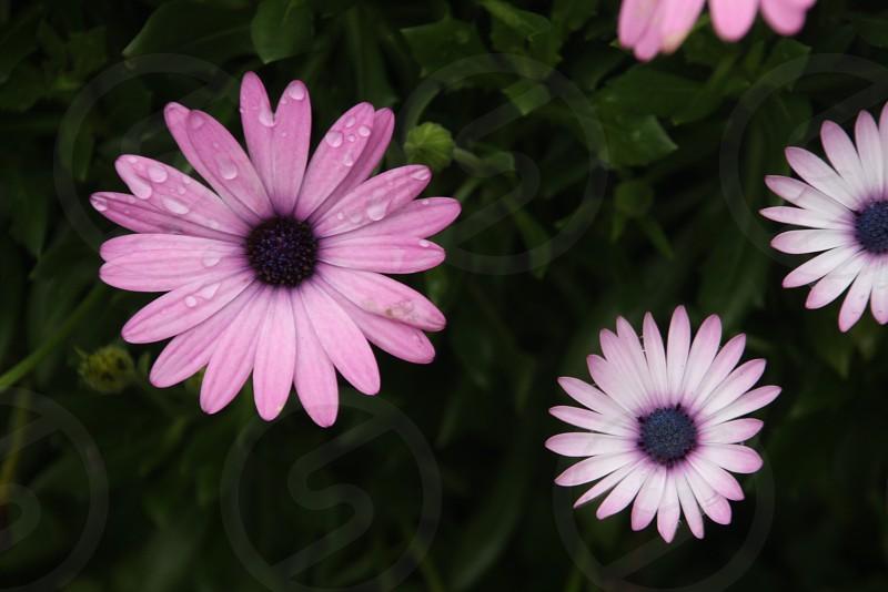 rain drops flower photo