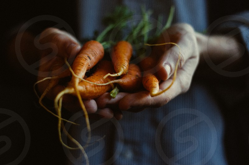 carrots thanks hands photo