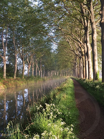 A view down the spectacularly untainted centuries old Canal du Midi near Toulouse France in the early morning.  photo