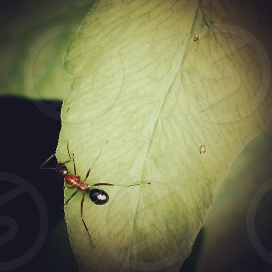 An ant crawling on a leaf. photo