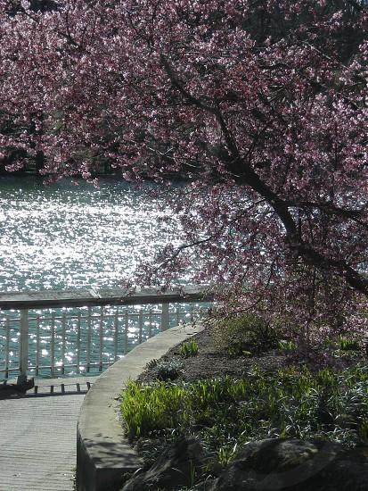 Tree and lake photo