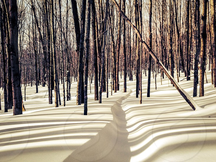 Snow trail fresh woods forest shadows snowshoe simple tranquil mood photo