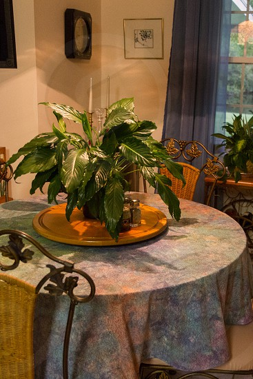 Plant (peace lily) on kitchen table photo