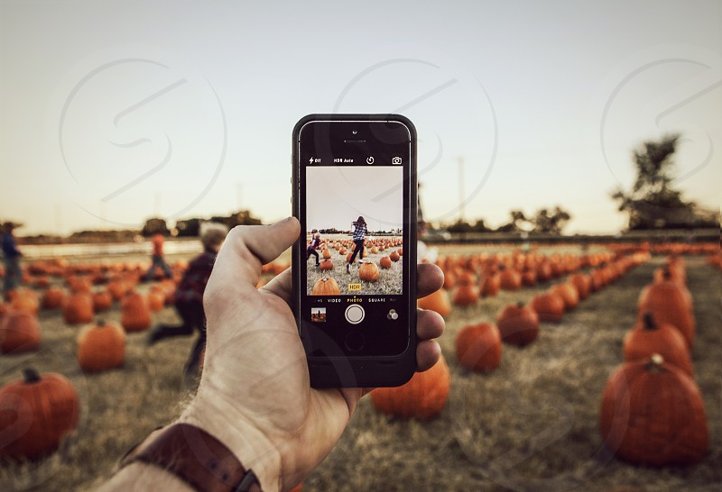 An iPhone shooting in a pumpkin patch.  photo
