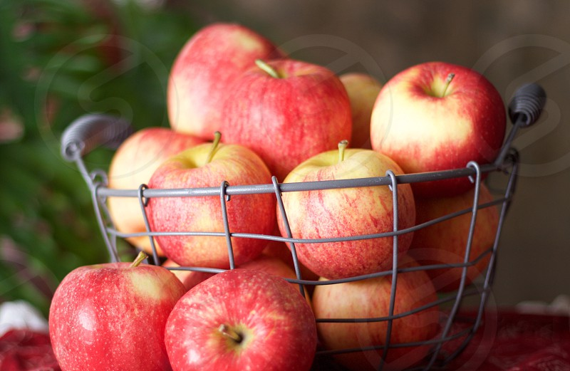 Gala apples in a wire basket blurred plant in the background  photo