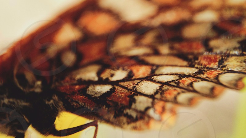 brown butterfly in macro photography photo