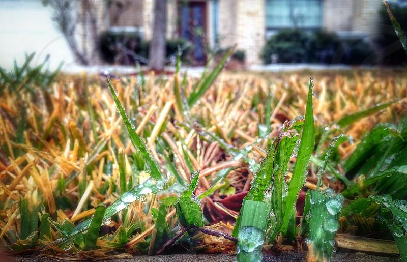 Ice on grass  photo