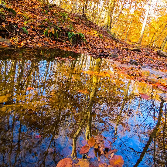 Reflections water autumn leaves pond  photo